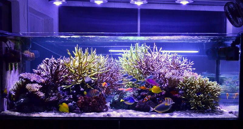 leds-im-aquarium-salzwasser-fischerzucht