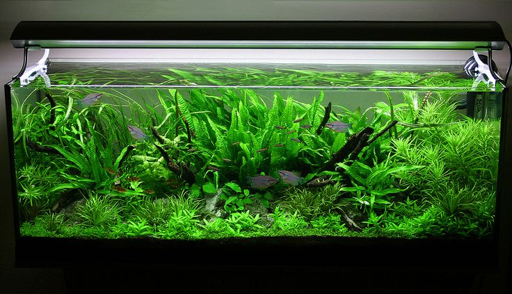 leds-im-aquarium-als-perfekte-beleuchtung