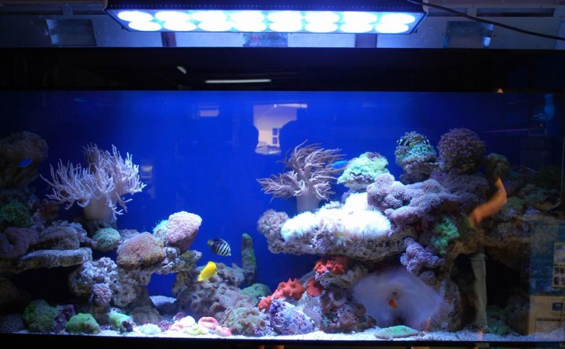 LEDs im Aquarium, Vorteile und Problematik